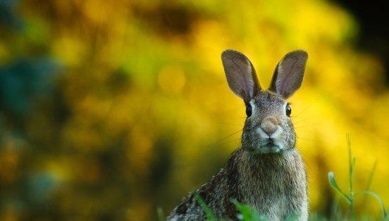 Habitat do coelho